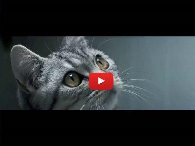 Transcreation inglese italiano spot tv cibo per gatti